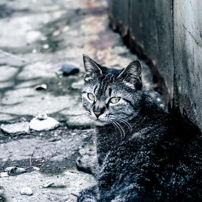 「振り返る野良猫」の写真素材