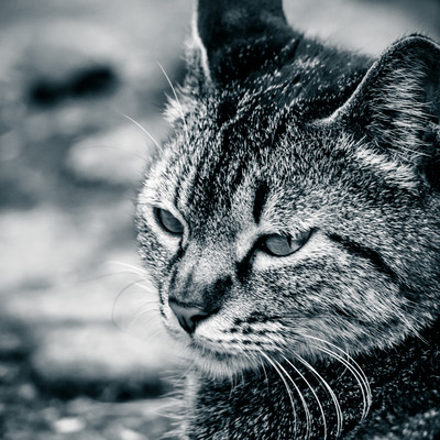 「体調が悪そうな猫」の写真素材