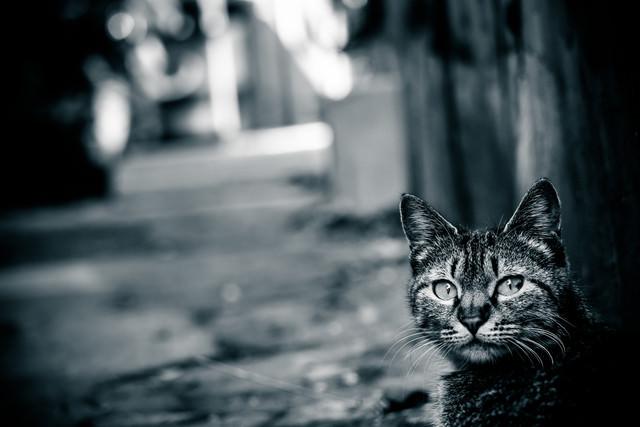 異世界への猫の案内人の写真