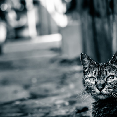 「異世界への猫の案内人」の写真素材