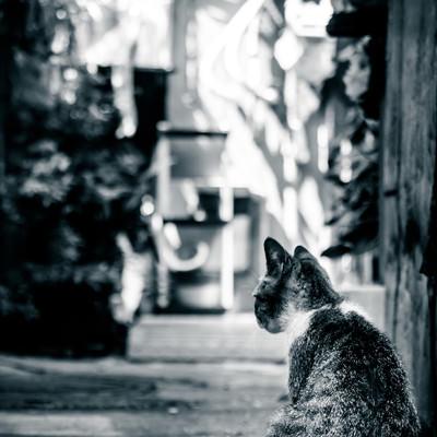 「路地裏猫(モノクロ)」の写真素材