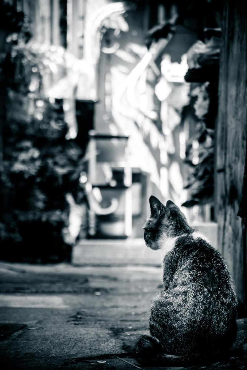 「路地裏猫(モノクロ)」の写真