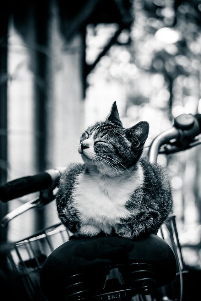 幸せそうな表情の猫ちゃんの写真