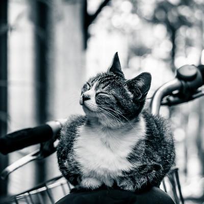 「幸せそうな表情の猫ちゃん」の写真素材