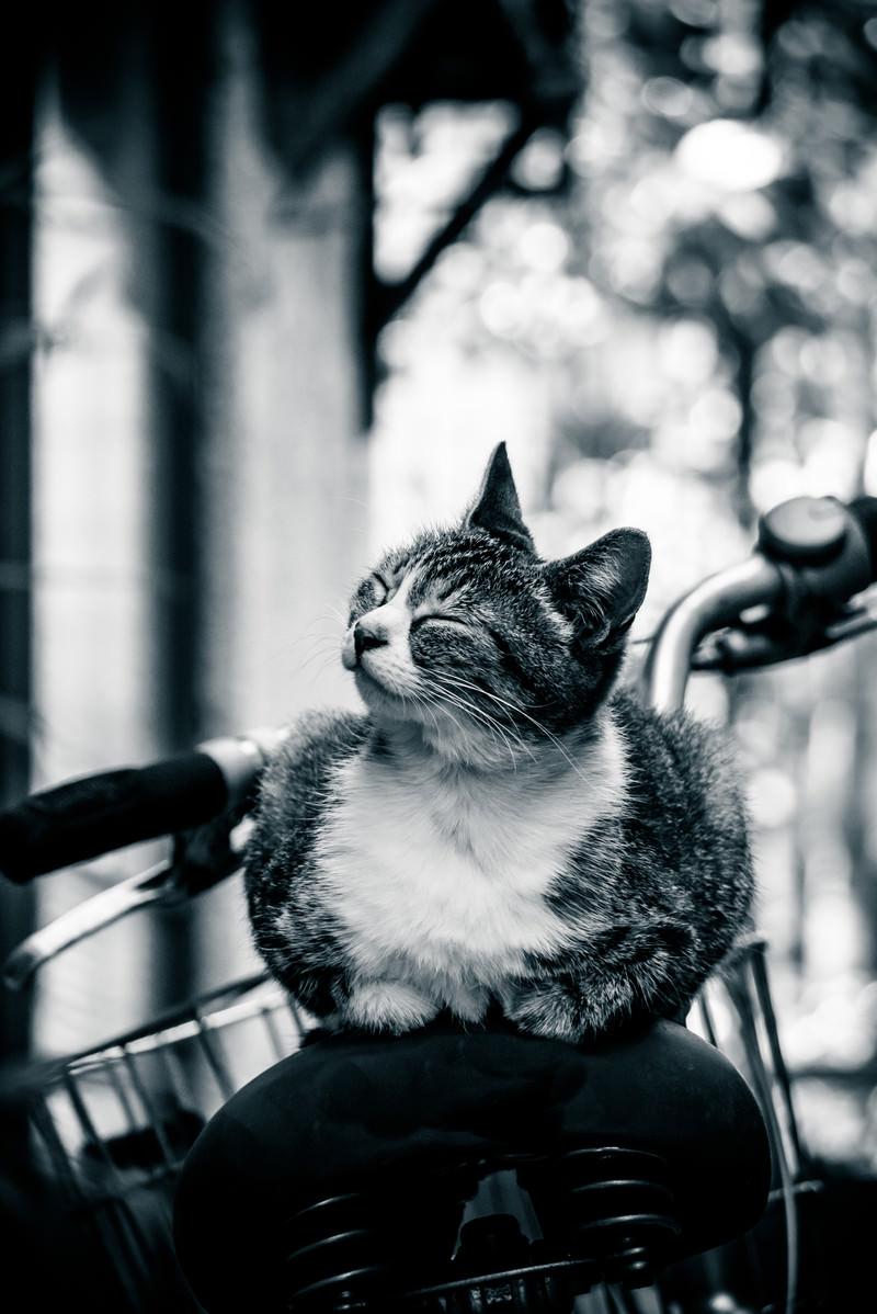 「幸せそうな表情の猫ちゃん」の写真