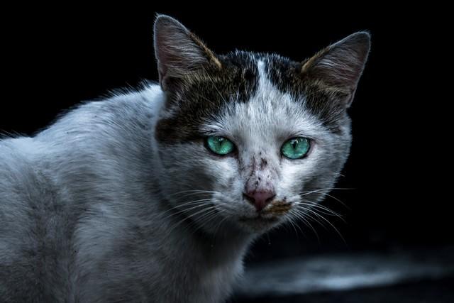 喧嘩後の猫さんの写真