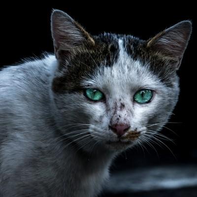 「喧嘩後の猫さん」の写真素材