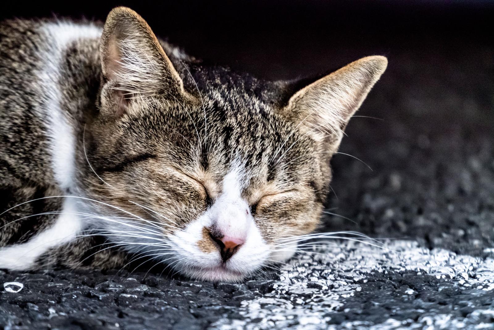 「路上で爆睡するネッコ」の写真