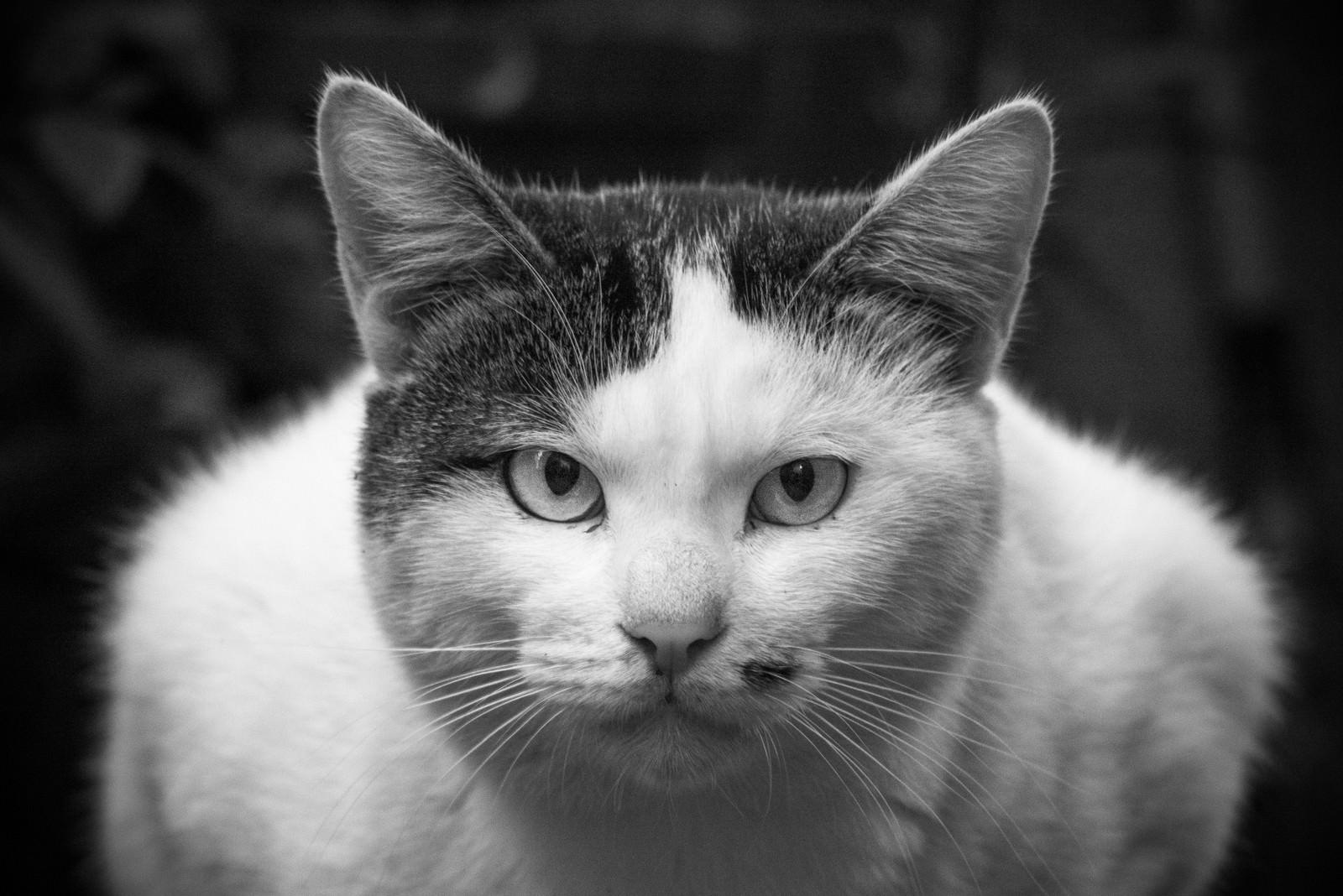 「こういう商社マンいるいる(猫)」の写真