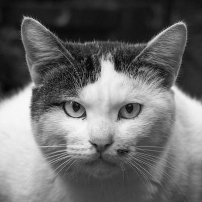 「こういう商社マンいるいる(猫)」の写真素材