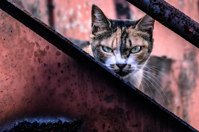 威嚇して縄張りを守る猫の写真