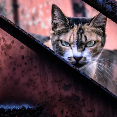 「威嚇して縄張りを守る猫」の写真素材