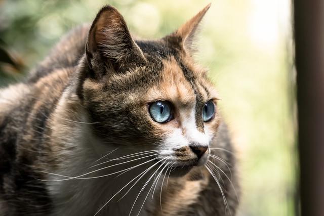 目を丸くするネッコの写真