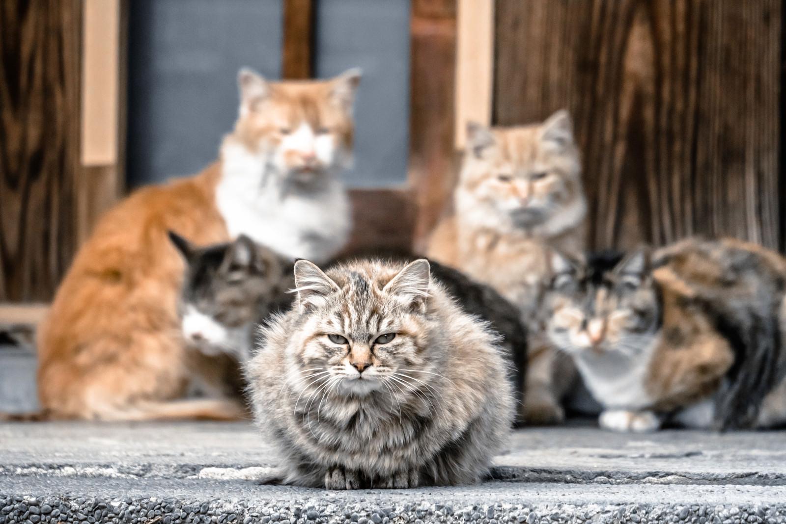 「三代目ネコ・ソウル・ブラザーズ」の写真