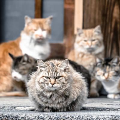 「三代目ネコ・ソウル・ブラザーズ」の写真素材