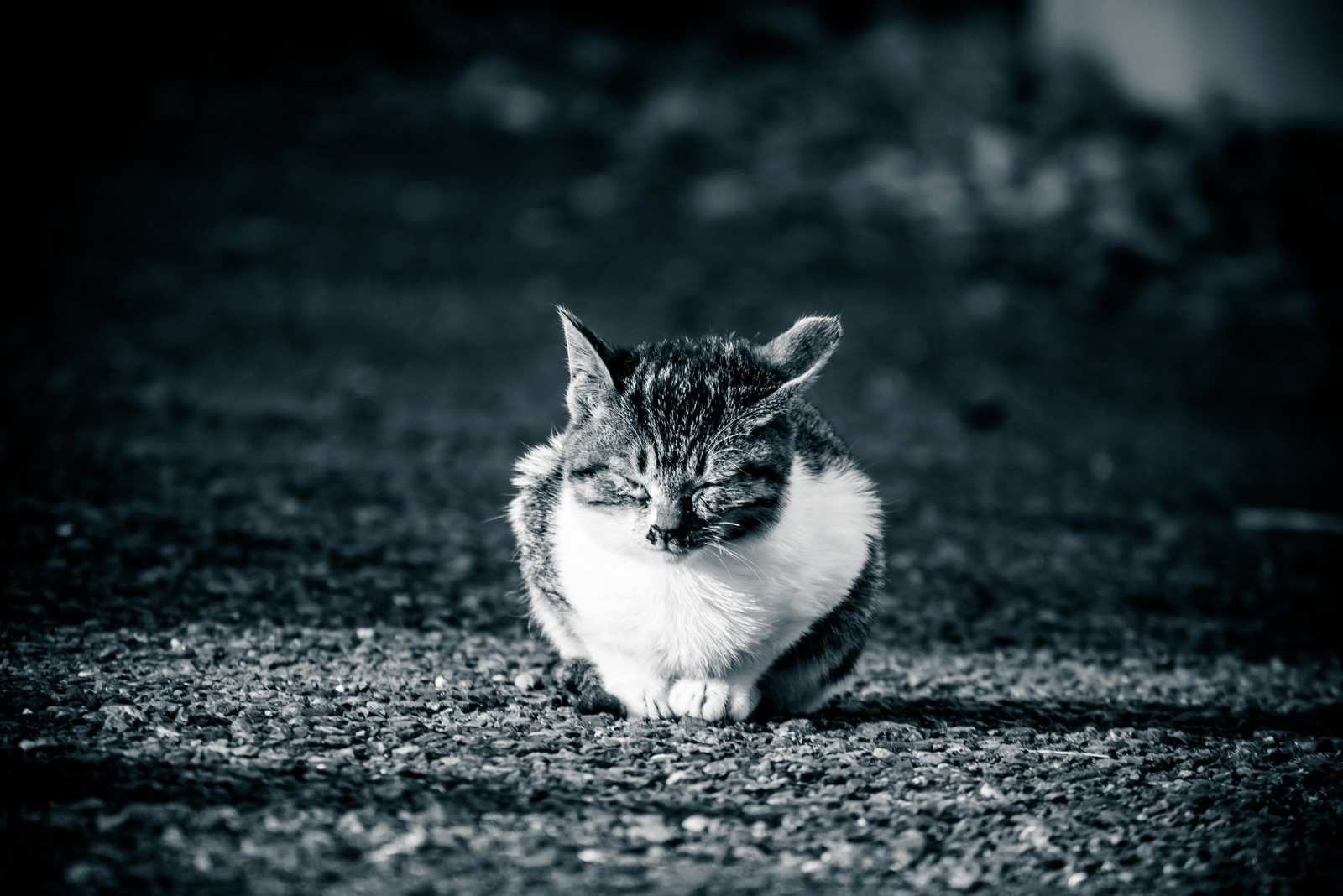 「ひなたぼっこ中のネッコ」の写真