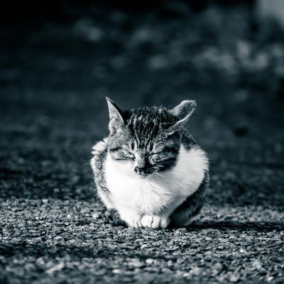 「ひなたぼっこ中のネッコ」の写真素材