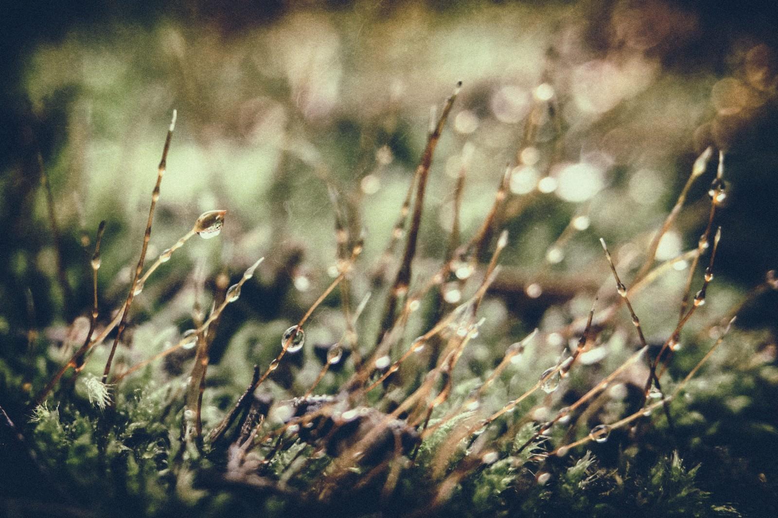 「水滴と植物水滴と植物」のフリー写真素材を拡大