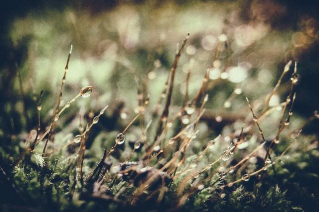 水滴と植物の写真