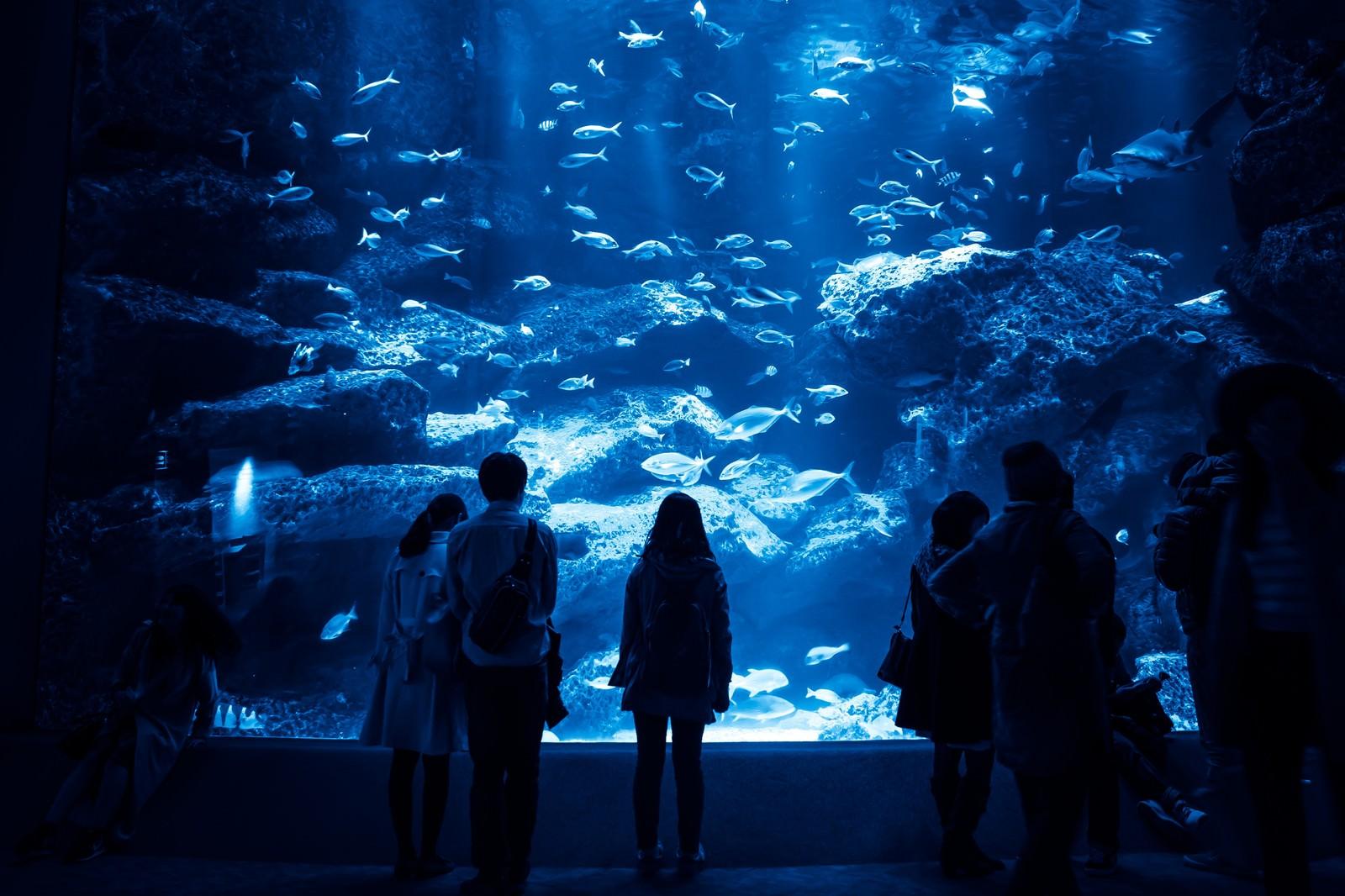 「巨大な水槽を見つめる来場者巨大な水槽を見つめる来場者」のフリー写真素材を拡大