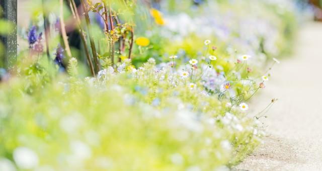 道に溢れる草花の写真