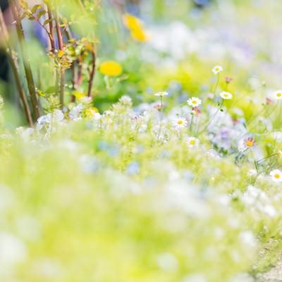 「道に溢れる草花」の写真素材