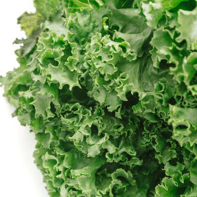「採れたばかりの葉物野菜」の写真素材