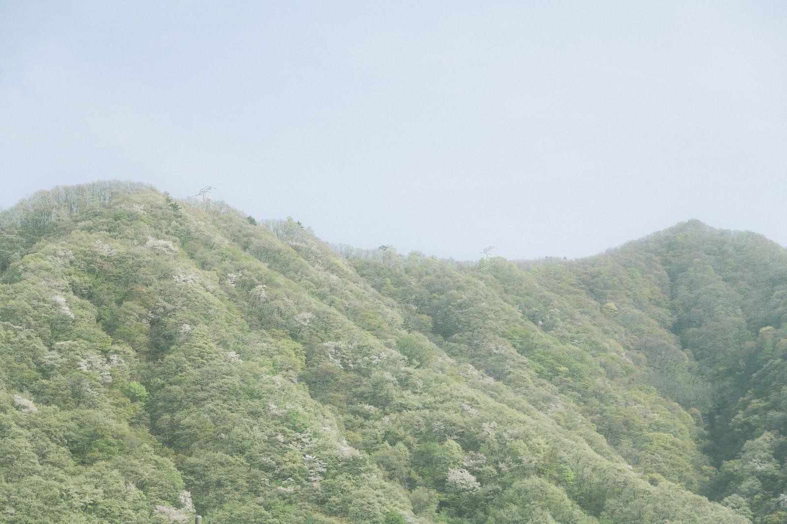 「春の山」の写真