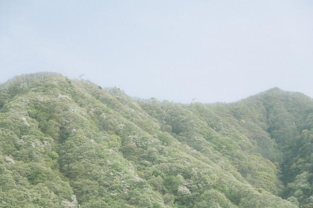 春の山の写真