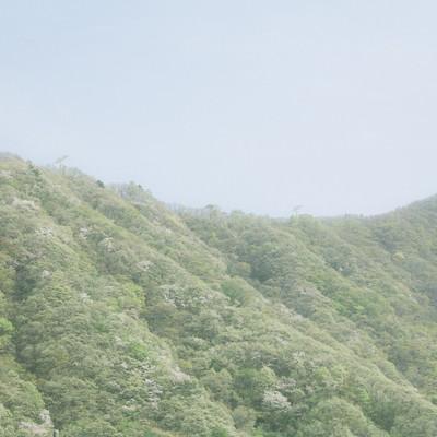「春の山」の写真素材