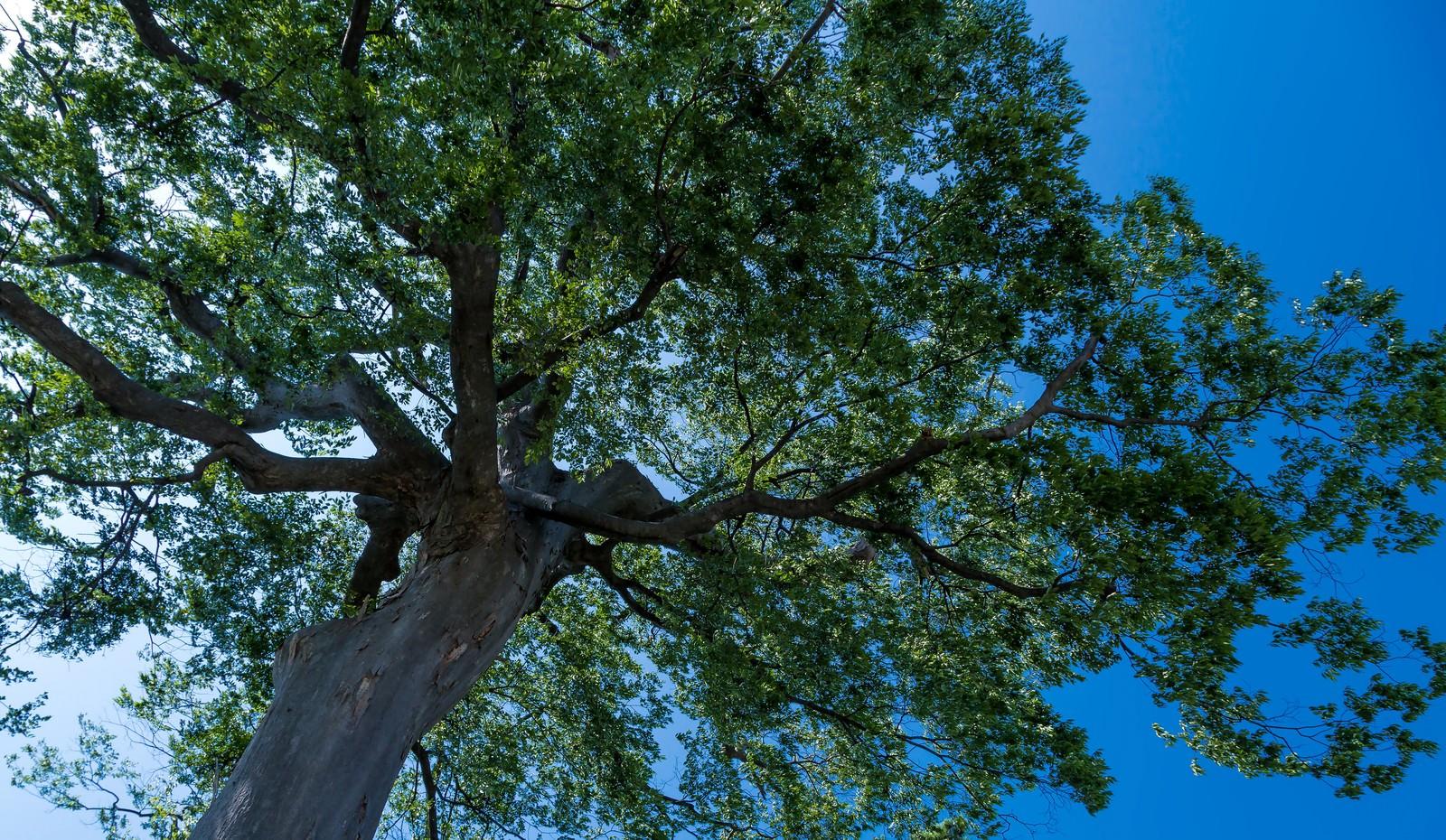 「大きな木の下で」の写真