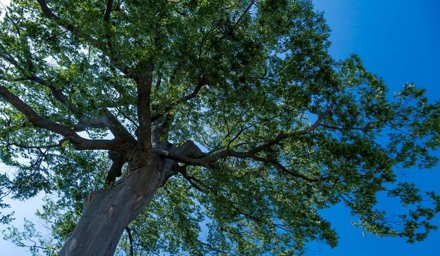 大きな木の下での写真