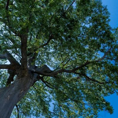 「大きな木の下で」の写真素材