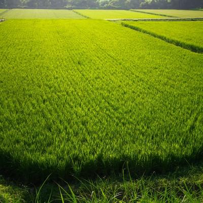 「田舎の田んぼ」の写真素材
