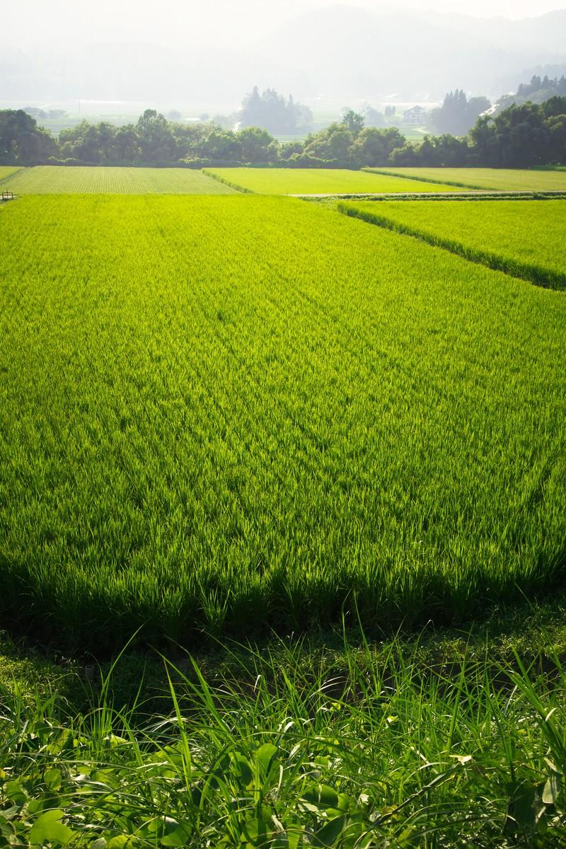 「田舎の田んぼ」の写真