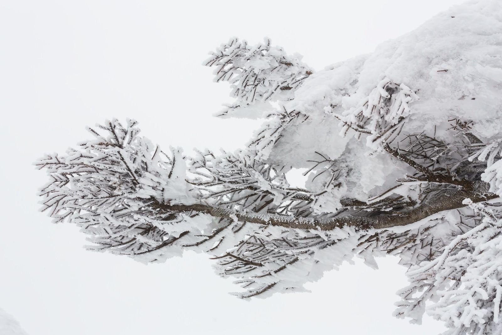 「蔵王の樹氷蔵王の樹氷」のフリー写真素材を拡大