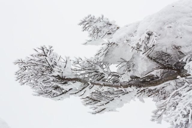 蔵王の樹氷の写真