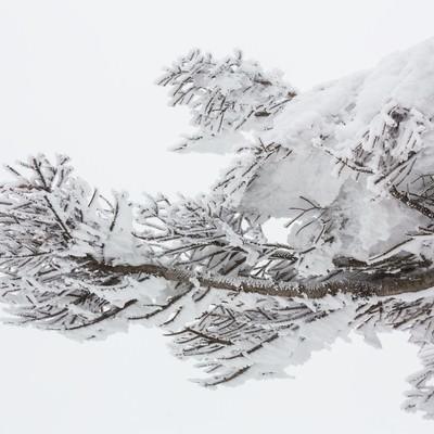 「蔵王の樹氷」の写真素材