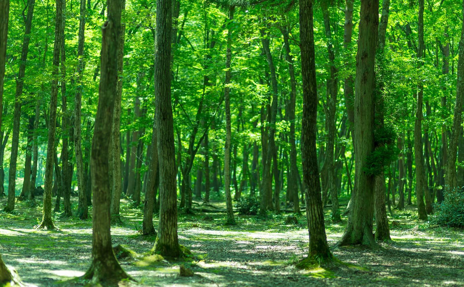 「緑の木々緑の木々」のフリー写真素材を拡大