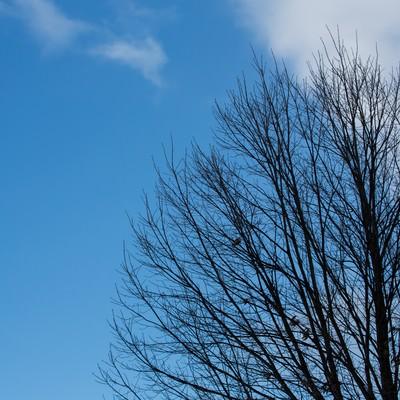 「晴れた日の枯れた木」の写真素材