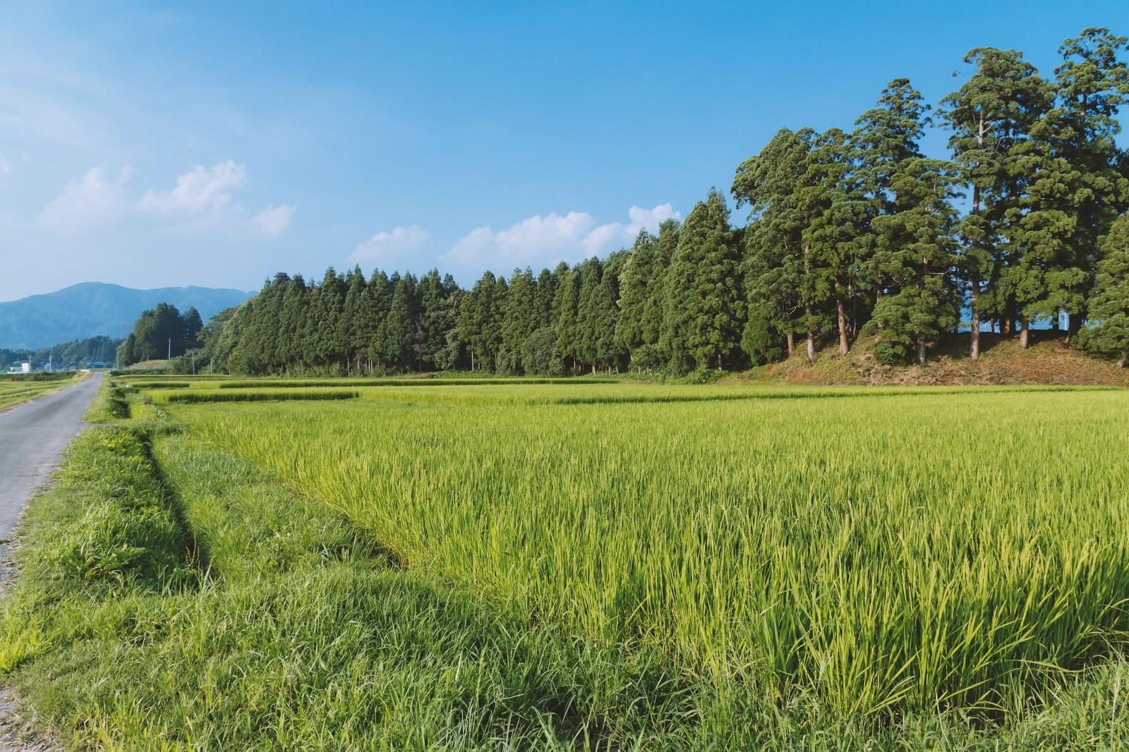 「田舎の田畑田舎の田畑」のフリー写真素材を拡大