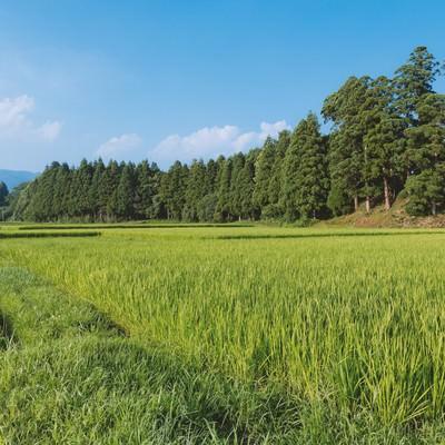 「田舎の田畑」の写真素材