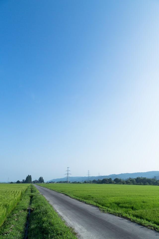田んぼと青空の写真