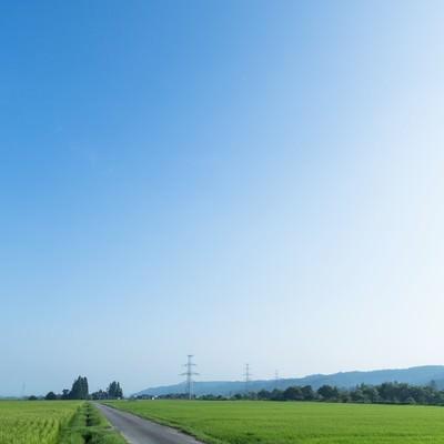 「田んぼと青空」の写真素材