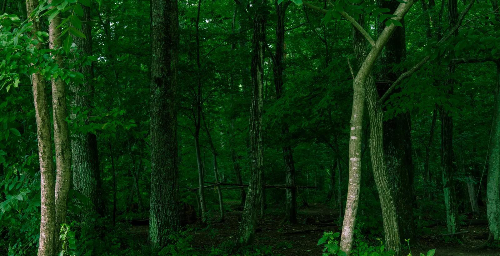 「不気味な深い森」の写真