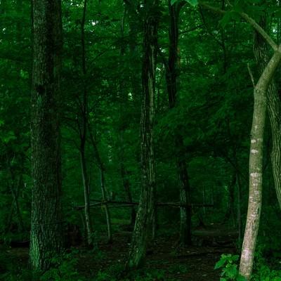 不気味な深い森の写真
