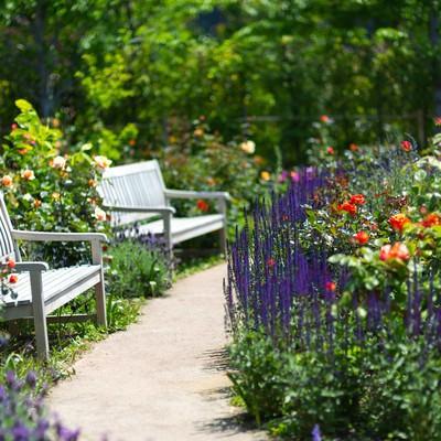 「緑の中のベンチ」の写真素材