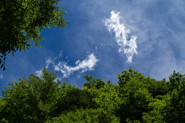 森の中から見上げる青空の写真