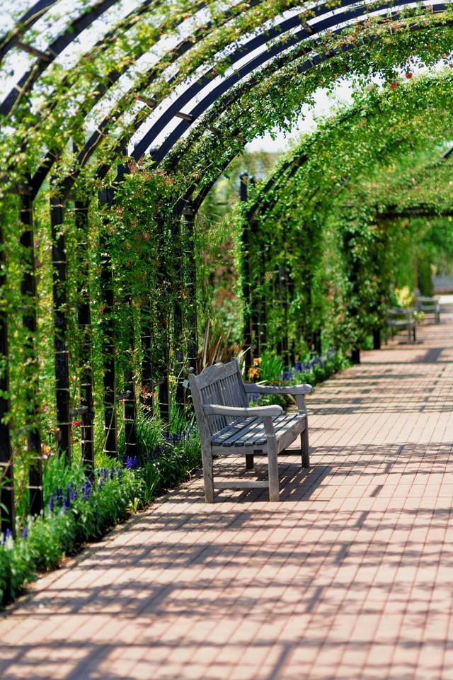 植物園のアーチとベンチの写真