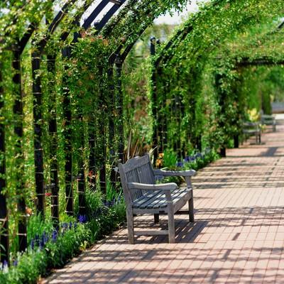 「植物園のアーチとベンチ」の写真素材